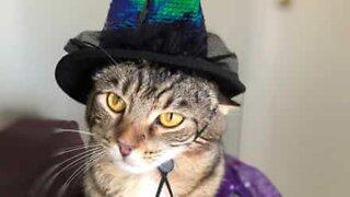 Magician cat pulls off disappearing trick