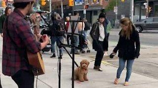 Dog is busker's biggest fan!