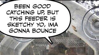 Bird feeder, feeder bird