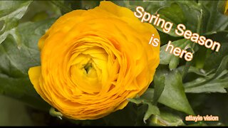 Spring Season is here