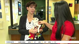 Lee Co. Domestic Animal Services 'Flip This Kennel' adoption event