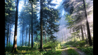 HUMAN HEALING IN THE FOREST: SHINRIN-YOKU LITERALLY FOREST BATHING