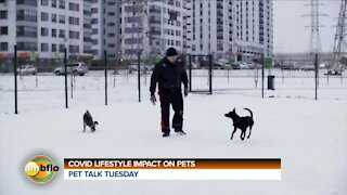 PET TALK TUESDAY - IMPACT OF COVID AT HOME