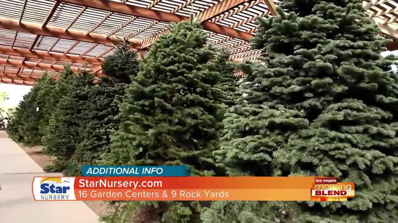 Christmas Trees Arriving This Week!