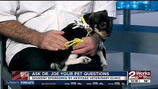 Ask Dr. Joe: Tango the Jack Russell Terrier
