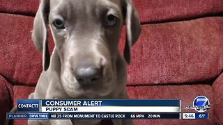BBB warns about puppy scams