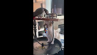 Thoughtful parrot feeds puppy its dinner