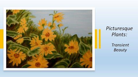 My Portfolio: Picturesque Plants: Transient Beauty