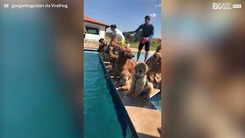 Cães preferem mergulhos na piscina a sessão fotográfica