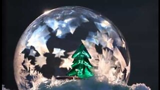 Natural snow globe complete with Christmas tree