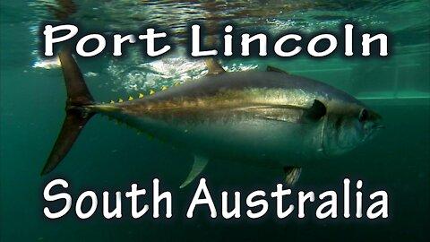 'Swim With The Tuna', Port Lincoln - South Australia