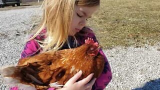 Little girl gets chicken to sleep with lullaby!