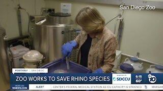 San Diego Zoo working to save Rhino species