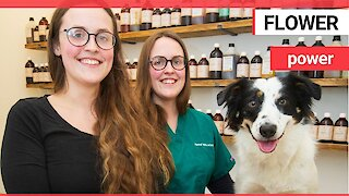 Twins have opened a vet surgery which treats pets with herbal remedies