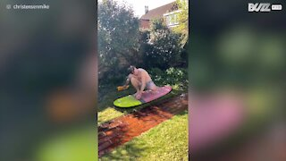 Pai leva filhos a surfar no jardim!