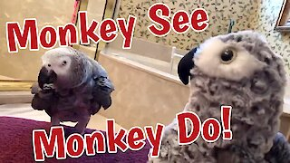 """Parrot plays game of """"monkey see, monkey do"""""""