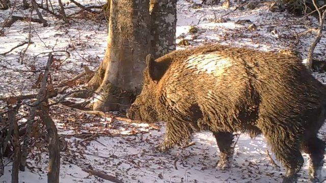 Satte opp viltkamera i skogen - Sjekket resultatet etter ett år