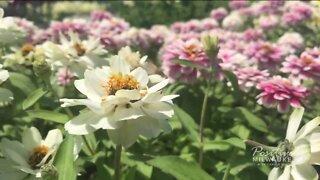 Alice's Garden gives away Summerfest flowers