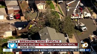 Couple killed as tree falls on vacation rental