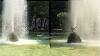 Cane lotta contro una fontana!