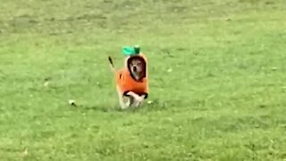 Puppy hilariously prances at the park in his Halloween costume