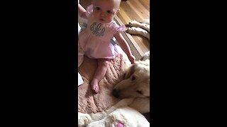 Adorably baby girl gently tugs on Golden Retriever's ear