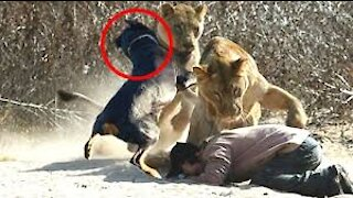 Unexpected Animal Saves Animal Compilation