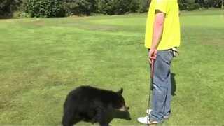 Friendly Bear Cub Walks Across Golf Course To Give Man A Hug