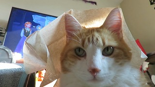 Patient cat lets owner cover him with napkins