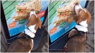 Dog tries to eat sandwich off a billboard