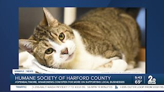 Humane Society of Harford County recognizes National Specially-abled Pet Day