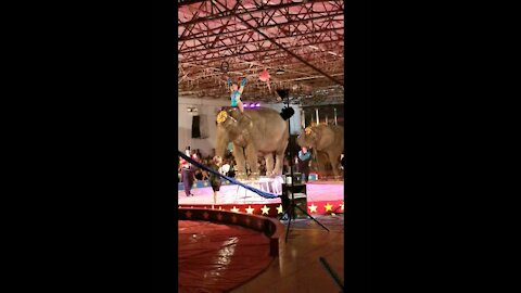 Ball Balancing Elephant