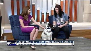 Idaho Humane Society: Angel
