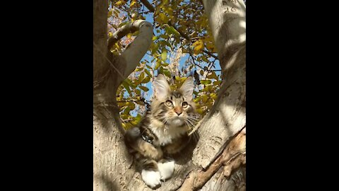 Kitten's rest is disturbed by a loud crow