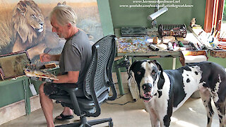 Bouncing Great Dane Video Bombs Artist's Lion Painting Video