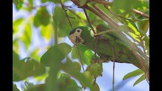 cute parrot videos compilation