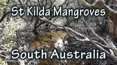 St Kilda Mangrove Walk, South Australia