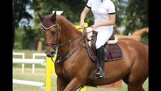 Elegant Horse Riding Competition Part 2