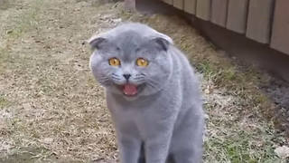 Cute Cat Arguing With Her Human