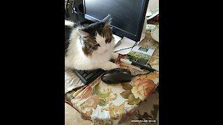 funny cat. Cute cat