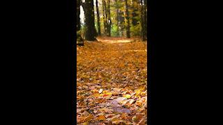 Autumn *