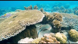 Beautiful Animals Under Water hd