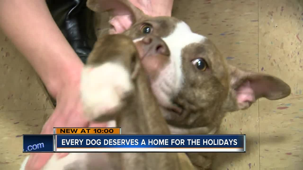 Wisconsin Humane Society wants you to foster a dog for Thanksgiving