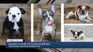 4 puppies stolen from Petland Tulsa