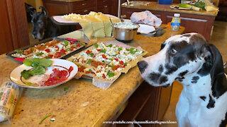 Polite Great Dane Sample Lasagna Roll Ups Ingredients