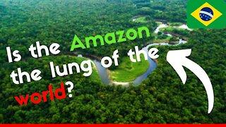 AMAZON RAINFOREST (Deforestation, Biodiversity, Amazon River...)