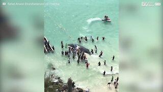 Il salvataggio della balena e l'entusiasmo delle persone