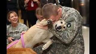 Reunion with My Dog after returning from Afghanistan