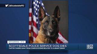 Scottsdale police service dog dies