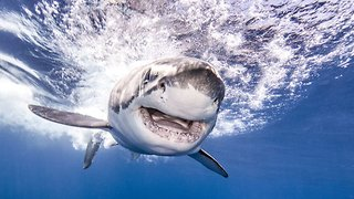 Stunning Underwater Images Are Shaking Up Shark Stereotypes One Dive At A Time